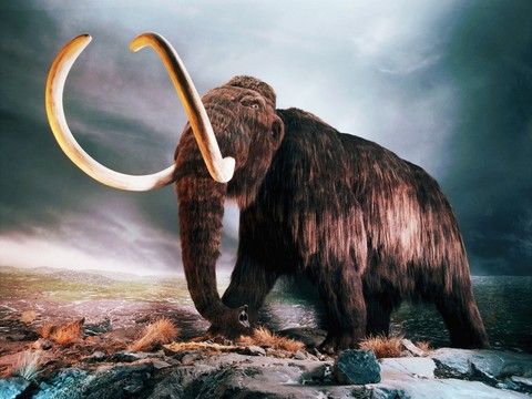 woolly_mammoth-normal